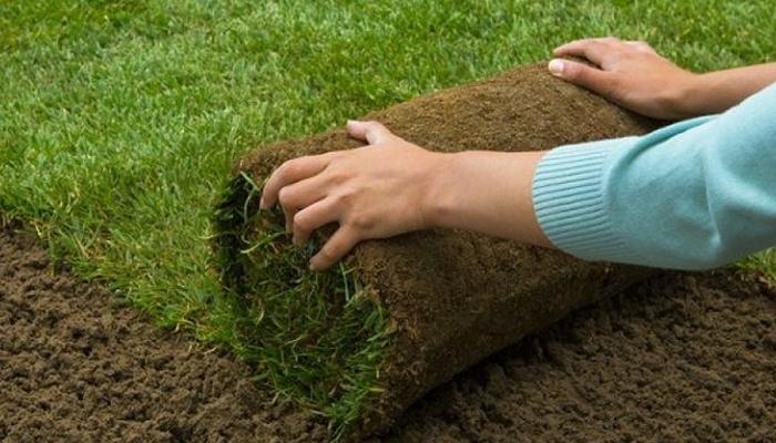 Kinh nghiệm trồng cỏ sân golf đạt tiêu chuẩn